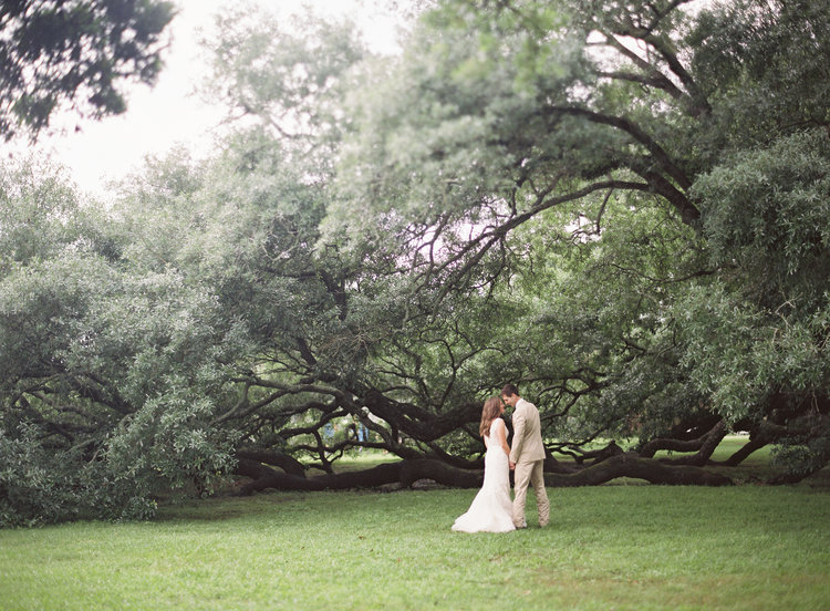 bride and groom holding hands in a field with an old oak tree in background