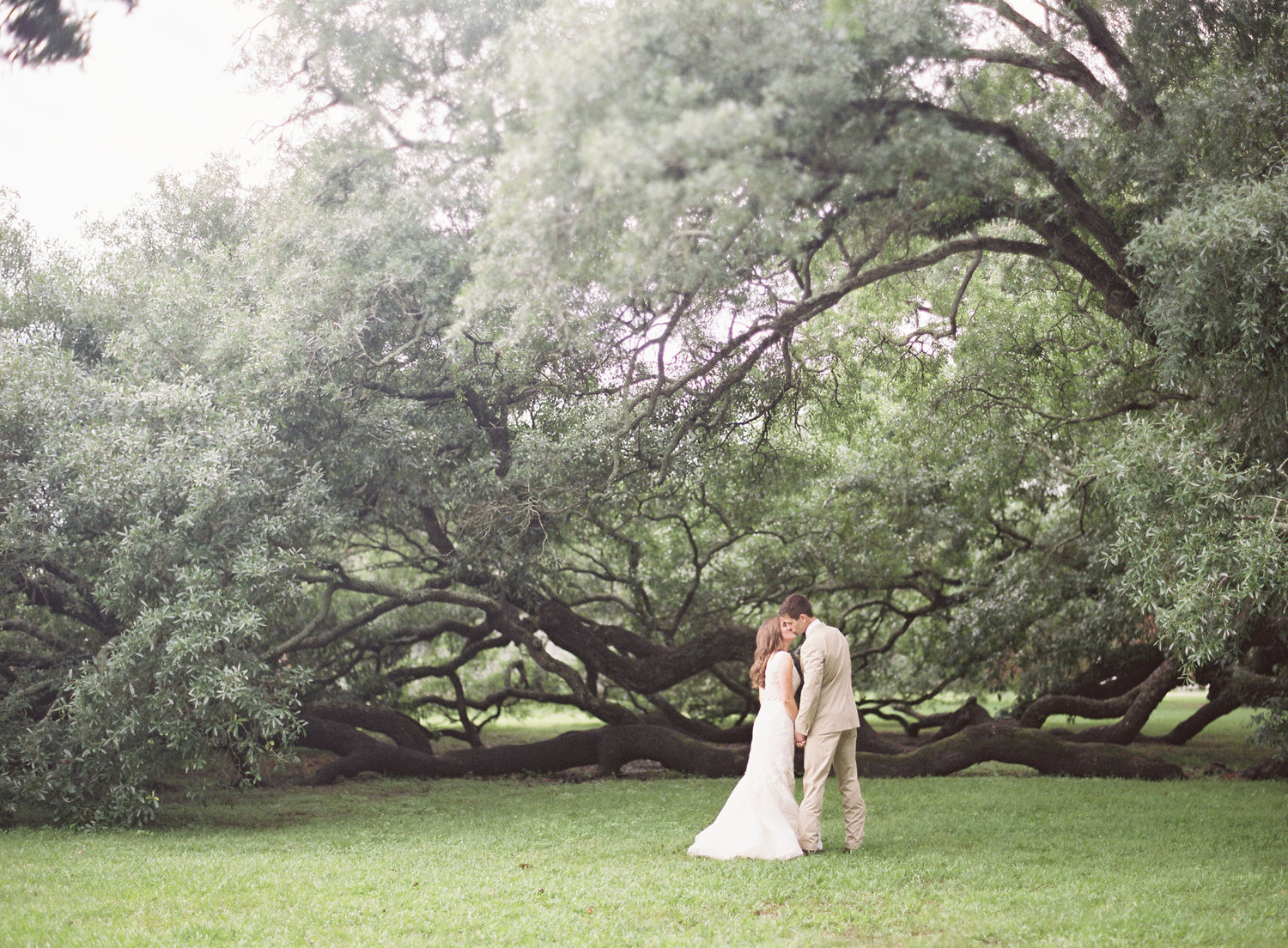 bride and groom kissing in front of a giant oak tree in the park in New Orleans