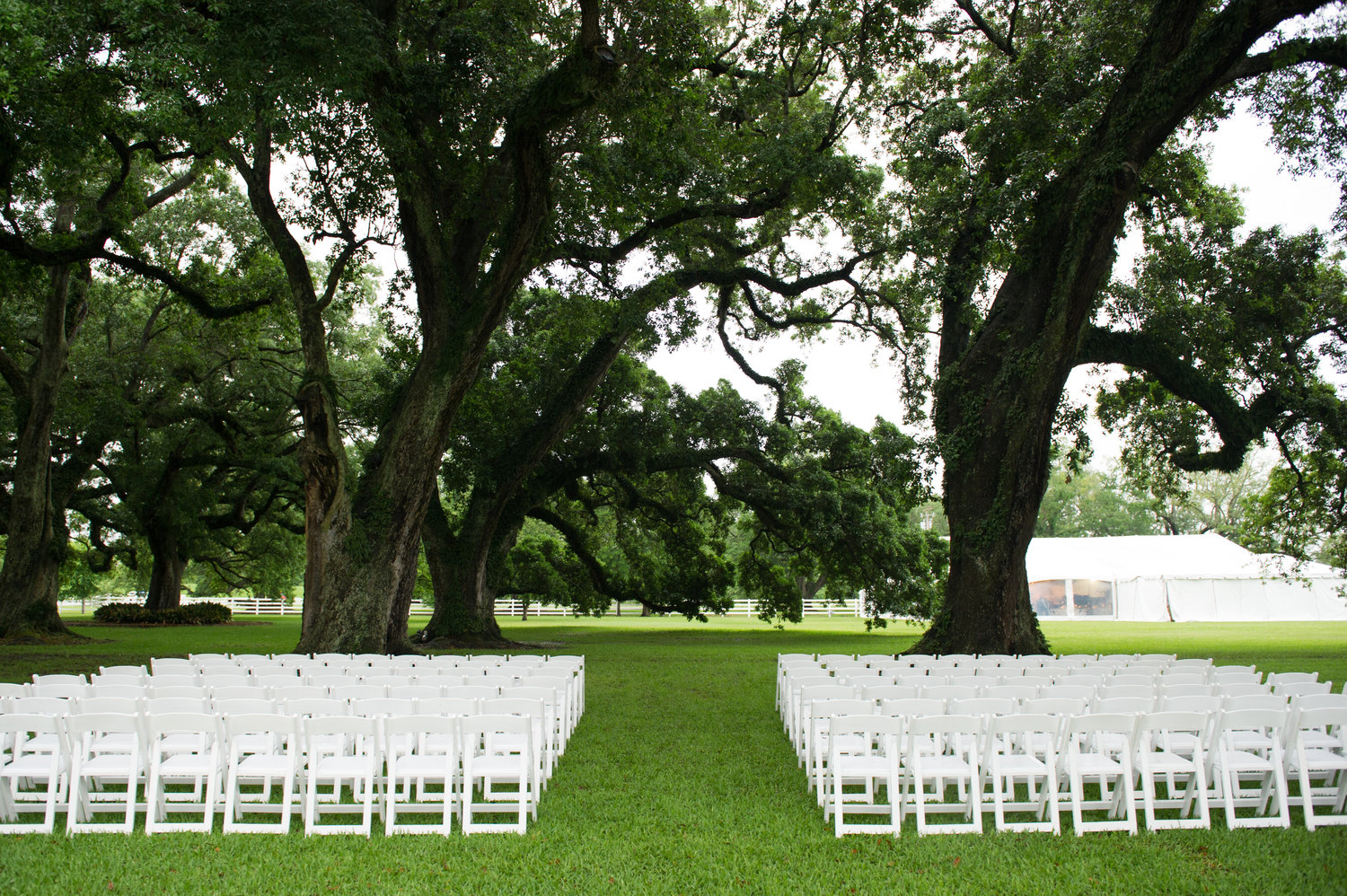 white chairs lines up under oak trees ready for the wedding ceremony